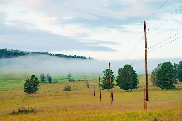 Mistig berglandschap met naaldbomen in weide.