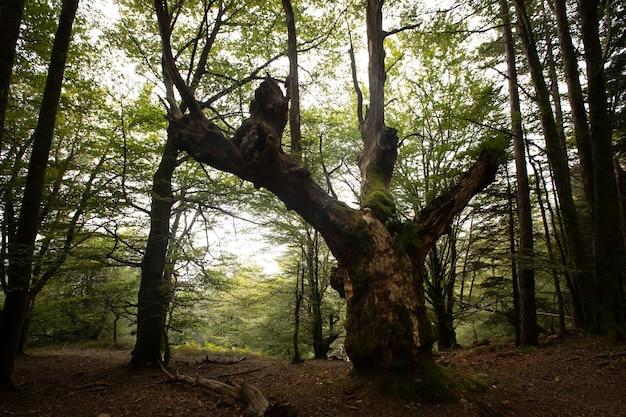 Mistig bos van artikutza in de baskische bergen