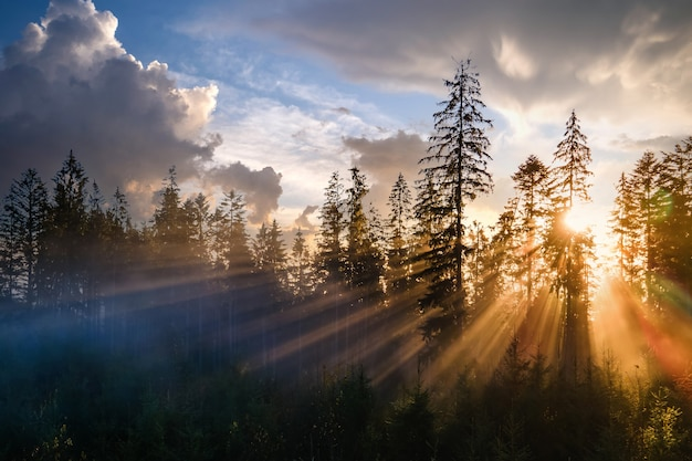 Mistig groen dennenbos met luifels van sparren en zonsopgangstralen die door takken in de herfstbergen schijnen.