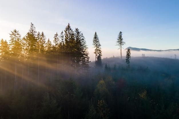 Mistig groen dennenbos met luifels van sparrenbomen en zonsopgangstralen die door takken in herfstbergen glanzen.