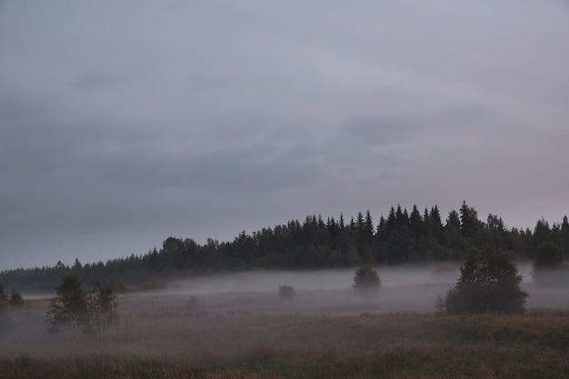 Mistig herfstlandschap met een veld bij het bos