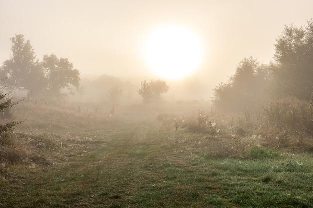 Mistig herfstlandschap met silhouetten van bomen en zon wazig in de lucht.