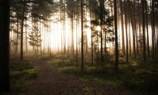 Mistig het meest forrest in een vroege ochtendtijd in de herfstseizoen
