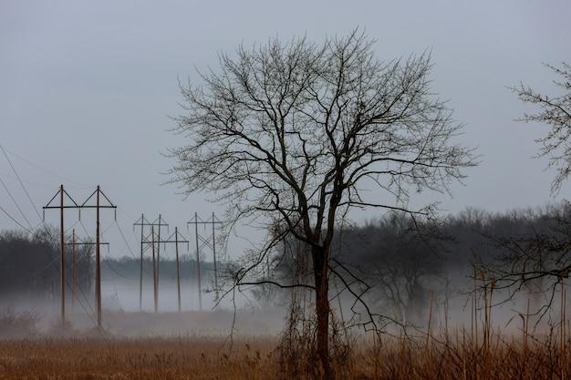 Mistig landschap in het groenhout, haagbeuk bomen, regenachtige herfst of sombere stemming
