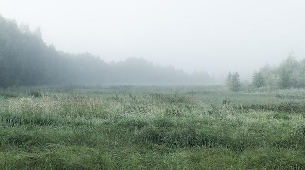 Mistig landschap met bos en veld
