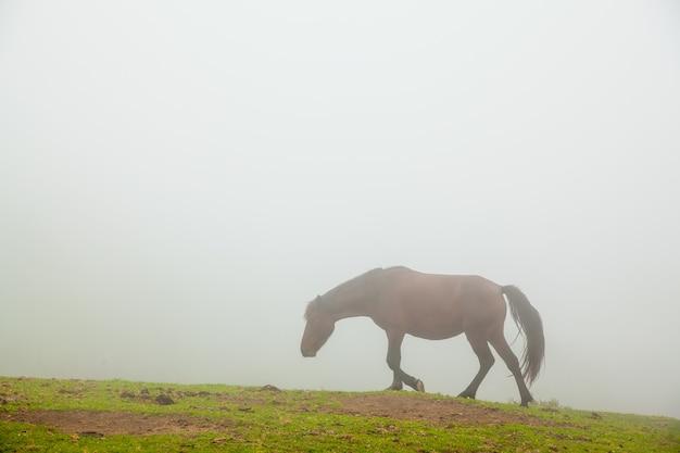Mistig landschap met wilde paarden in het groene gras van een berg
