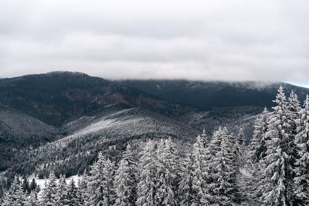 Mistig mistig berglandschap met sparrenbos en besneeuwde heuvels. winter natuur concept. stock foto