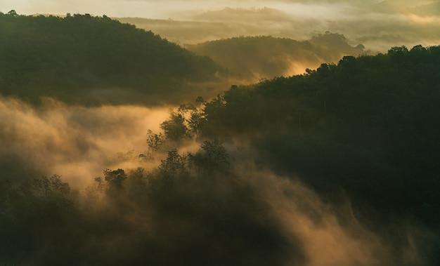 Mistig over bosheuvel met zachte zonsopgang in de ochtend