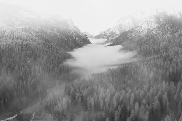 Mistige bossen in de winter