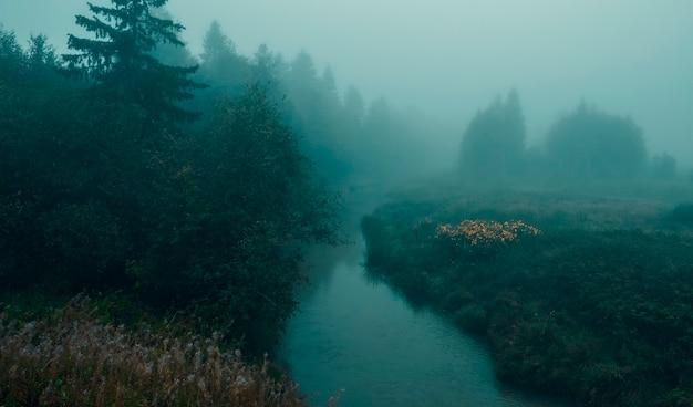 Mistige mystieke herfstochtend in het bos aan de lemovzha-rivier in het volosovsky-district van de leningrad-regio van rusland