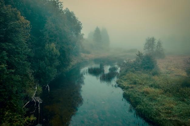 Mistige mystieke ochtend in het bos aan de lemovzha-rivier in het volosovsky-district van het leningrad-gebied van rusland