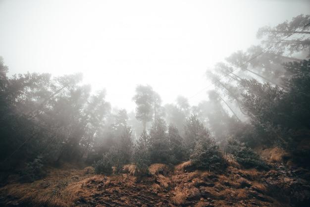 Mistige ochtend een bos met veel bomen