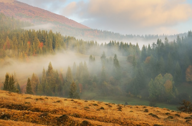 Mistige ochtend in de herfst karpaten