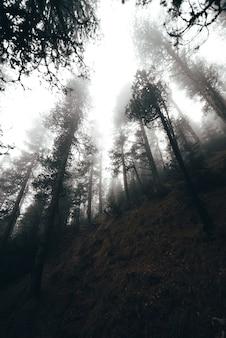 Mistige ochtend in een bos