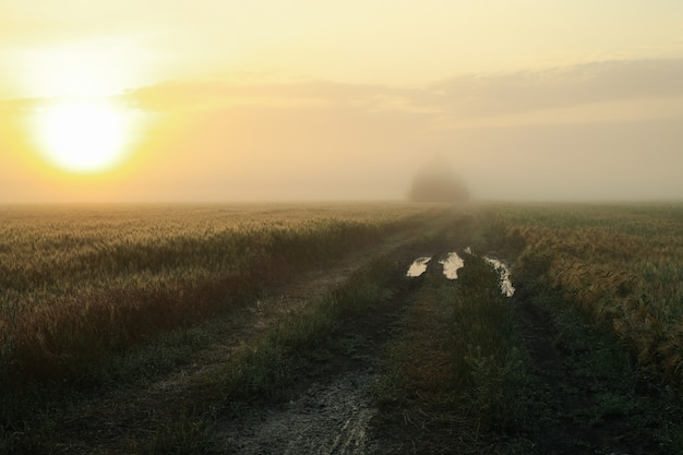 Mistige ochtend veld. mooie zomerochtend. zomer natuur