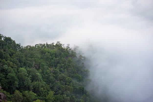 Mistige ochtendmist in vallei mooie nevelige landschapsberg