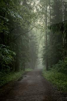 Mistige onverharde weg door naaldbos, mystiek landschap