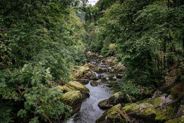 Misty river door een groen bos in de zomer. prachtig natuurlijk landschap van de rivier, reisconcept