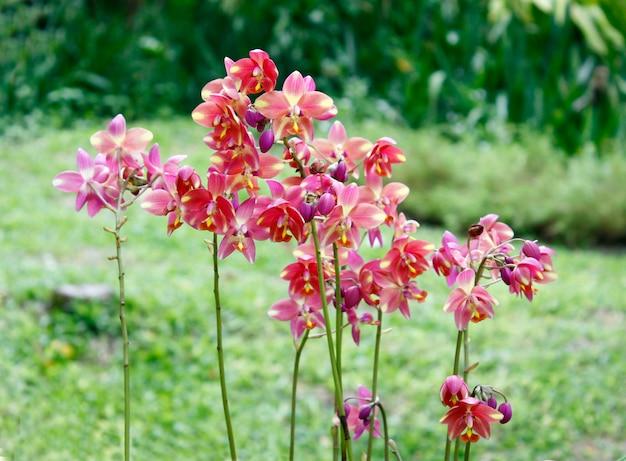 Mix van prachtige orchideeën