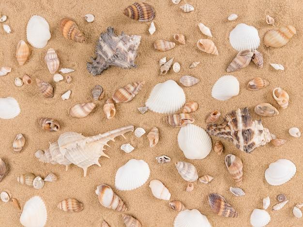 Mix van zeeschelpen op een zandachtergrond.