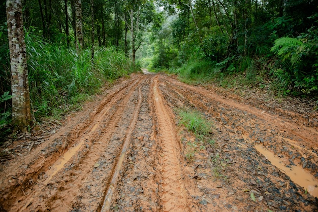 Modderweg in bos
