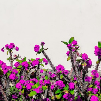 Mode minimale bloei. tropische bloemen