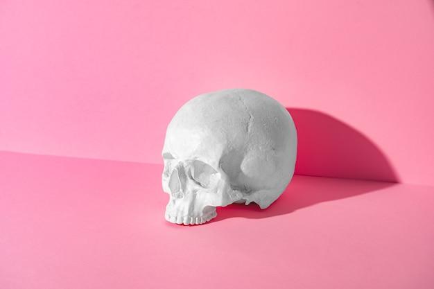 Model van een menselijke schedel op roze, studioschot