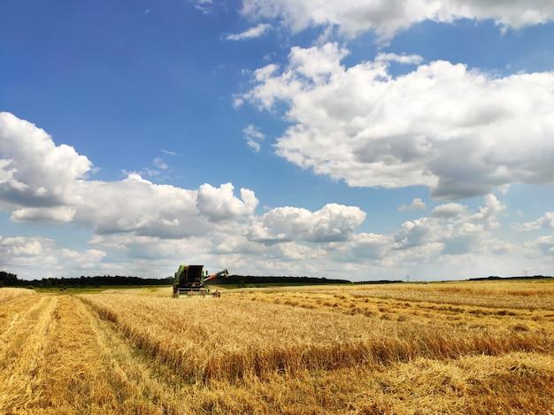 Modern combineren werken op een tarweveld, oogsten, op landbouwgrond. ooievaars gaan tarwe halen die in de velden is verspreid.