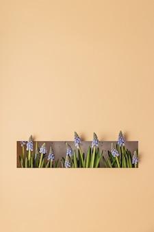 Modern lentestilleven met blauwe muscari-bloemen die groeien uit een rechthoekige snede in papier op een neutraal