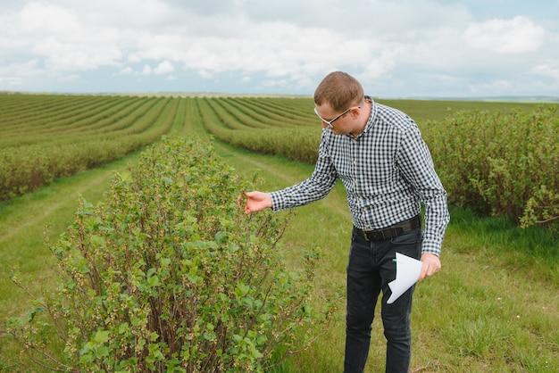 Moderne agronoom met map bezig met bessen veld op buiten