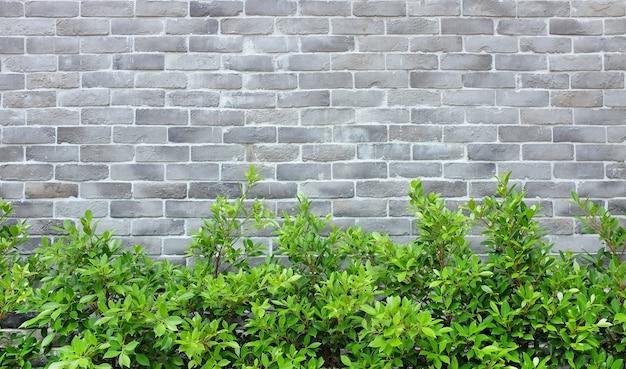 Moderne bakstenen muurachtergrond met boom