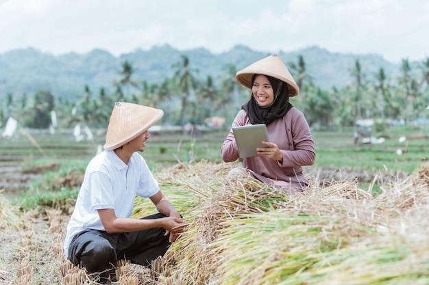 Moderne boeren die tabletten gebruiken om de rijst op de markt te brengen die op de velden wordt geoogst