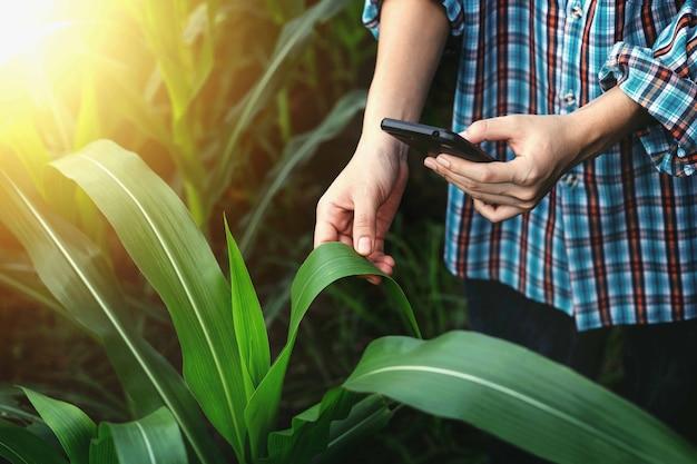 Moderne boeren gebruiken smartphones om maïsbladeren te controleren