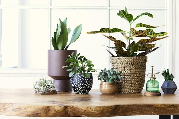 Moderne compositie van huistuin gevuld met veel mooie planten, cactussen, vetplanten, luchtplant in verschillende designpotten. stijlvol botanisch interieur. . huis tuinieren concept. sjabloon.