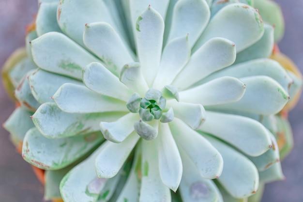 Moderne groene vetplanten, geweldig ontwerp voor elk doel. natuur achtergrond.
