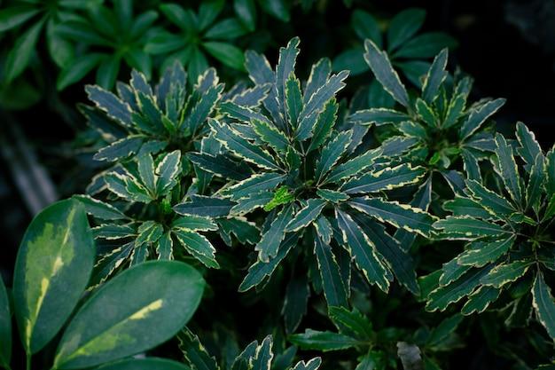 Modieuze exotische planten, bovenaanzicht. kamerplanten, groen gebied.
