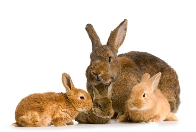 Moeder close-up op konijn met haar nieuw - geboren geïsoleerd konijn