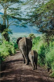 Moeder en babyolifant die bij ngorongoro lopen