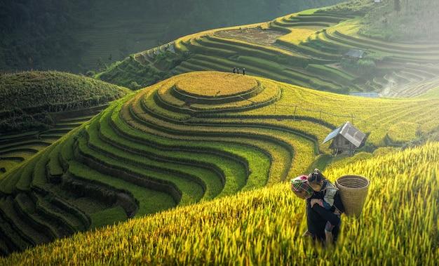 Moeder en dauther hmong, werkend op rijstterrassen, mu cang chai, vietnam