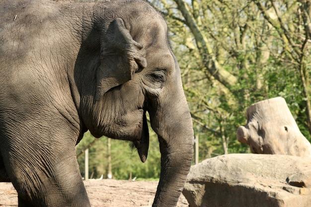 Moeder en een babyolifant in een bos overdag