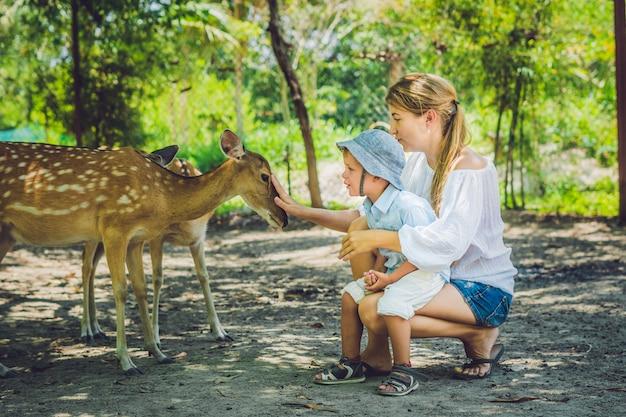Moeder en zoon aaien mooie herten van handen in een tropische dierentuin