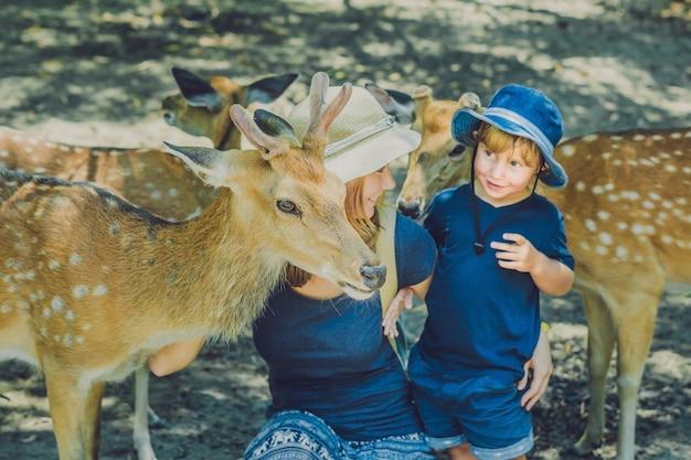 Moeder en zoon mooie herten voederen uit handen in een tropische dierentuin