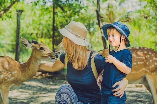 Moeder en zoon mooie herten voederen uit handen in een tropische dierentuin Premium Foto