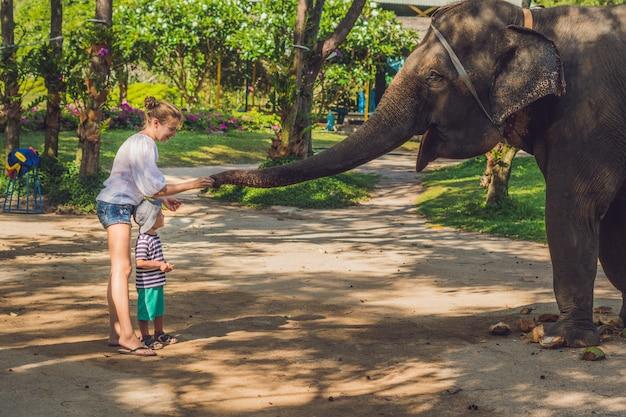 Moeder en zoon voeren de olifant in de tropen