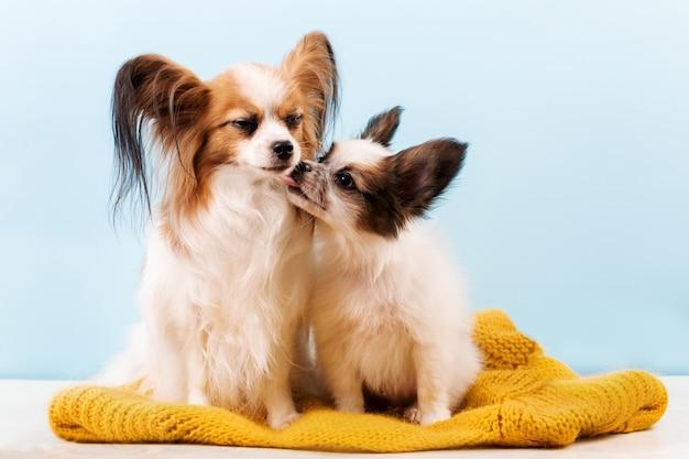 Moeder hond kussen puppy