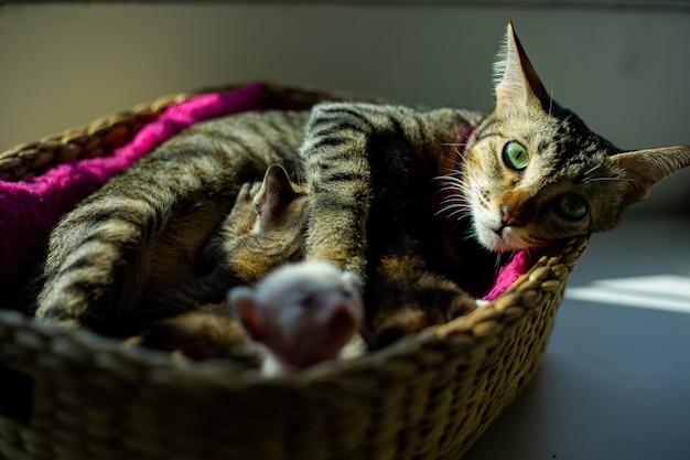 Moeder kat slaapt thuis met baby in mand