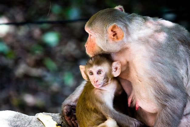 Moederaapportret in het wild zittend onder de boom knuffelde haar babyaapje in tropisch bos