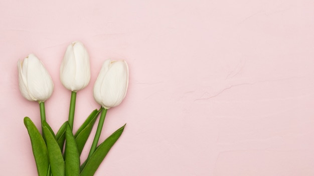 Moederdag tulpen met kopie ruimte