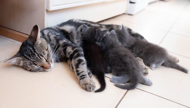 Moederkat die haar kittens verzorgt