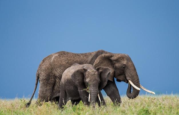 Moederolifant met een baby in de savanne